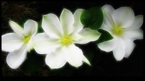 June Flowers 2 by Casperium