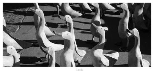 Wooden Ducks by silence-within