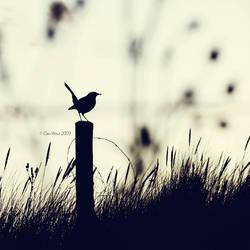 Blackbird by Oer-Wout