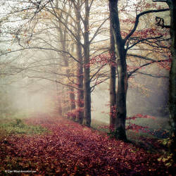 Foggy Melodies by Oer-Wout