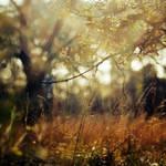 Autumn Melange by Oer-Wout