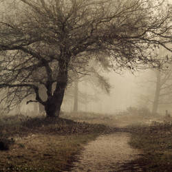 Sombre by Oer-Wout