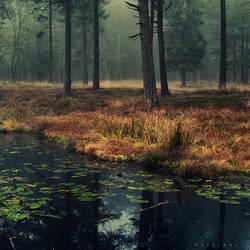 Ins Wasser by Oer-Wout