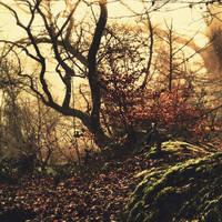 Dead-end by Oer-Wout
