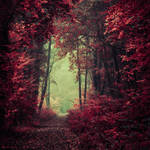 Reincarnate Now by Oer-Wout
