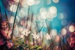 In Light by Oer-Wout