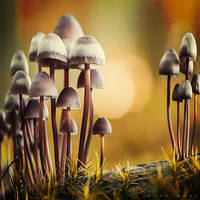 Funky Fungi by Oer-Wout
