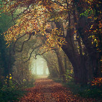 Autumn in my Heart by Oer-Wout