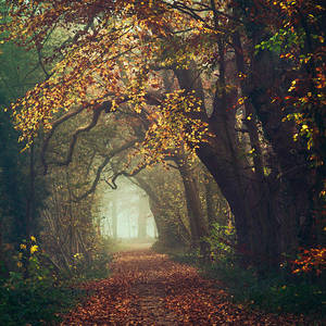 Autumn in my Heart by Oer-Wout