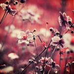 Flowering by Oer-Wout