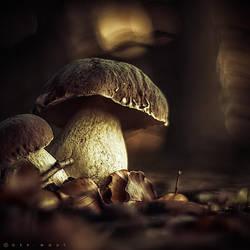Funky Fungi III by Oer-Wout
