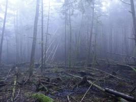 Dark Swamp by Track-Maidens