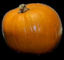 Stock Pumpkin 1 by PomPrint