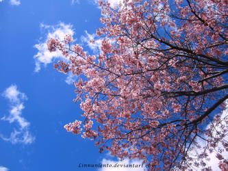 Cherry blossom wallpaper 2 by Linnunlento