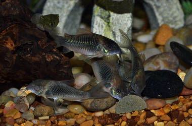 Cories by Laurie4000