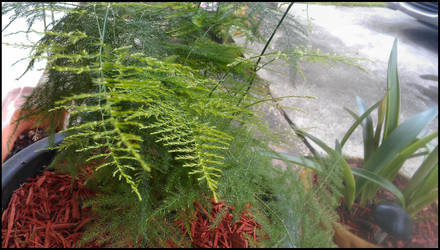 Fern by Laurie4000