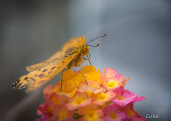 Seoul Zoo: Butterfly by Natures-Studio
