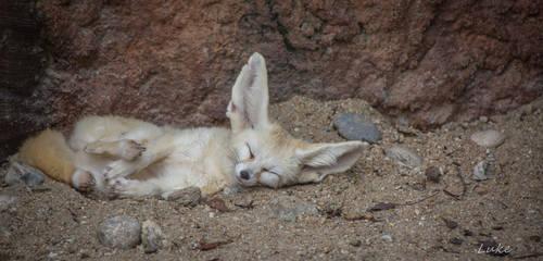Seoul Zoo: Sleepy White Fox by Natures-Studio