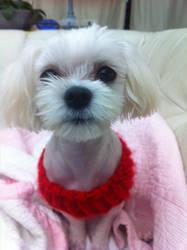 My dog by kimblast