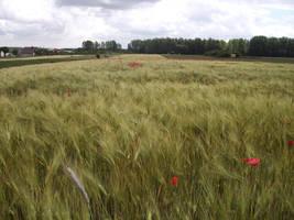 Field by feainne-stock