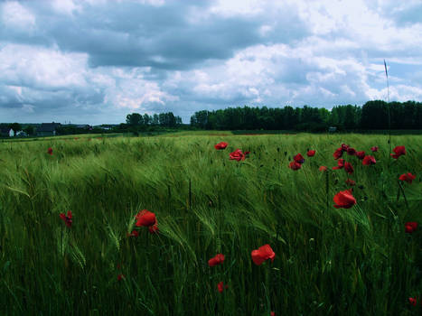 Green field by feainne-stock