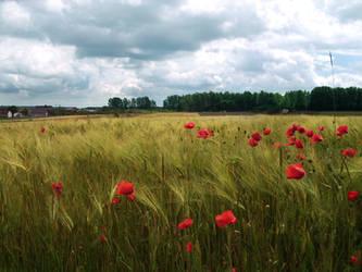 Ach fields by feainne-stock