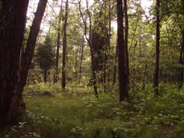 ...woods by feainne-stock