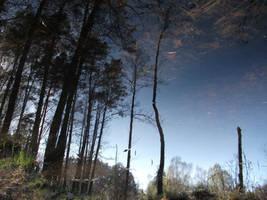 Reflection by feainne-stock