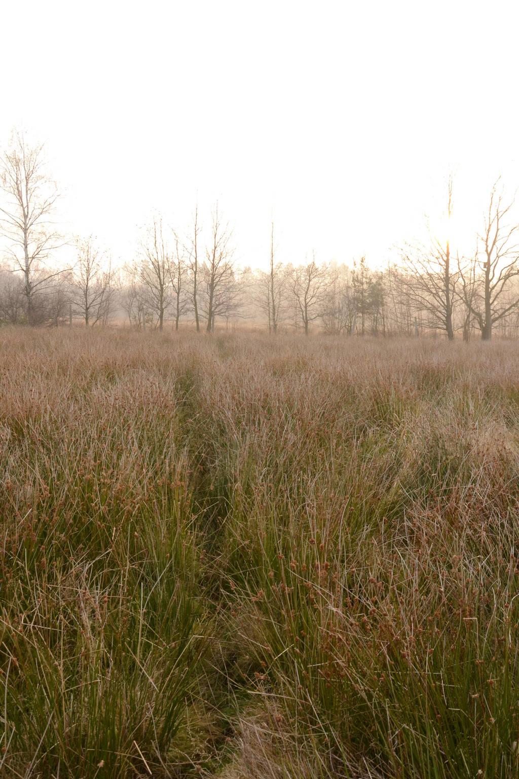 Grass Sea by feainne-stock