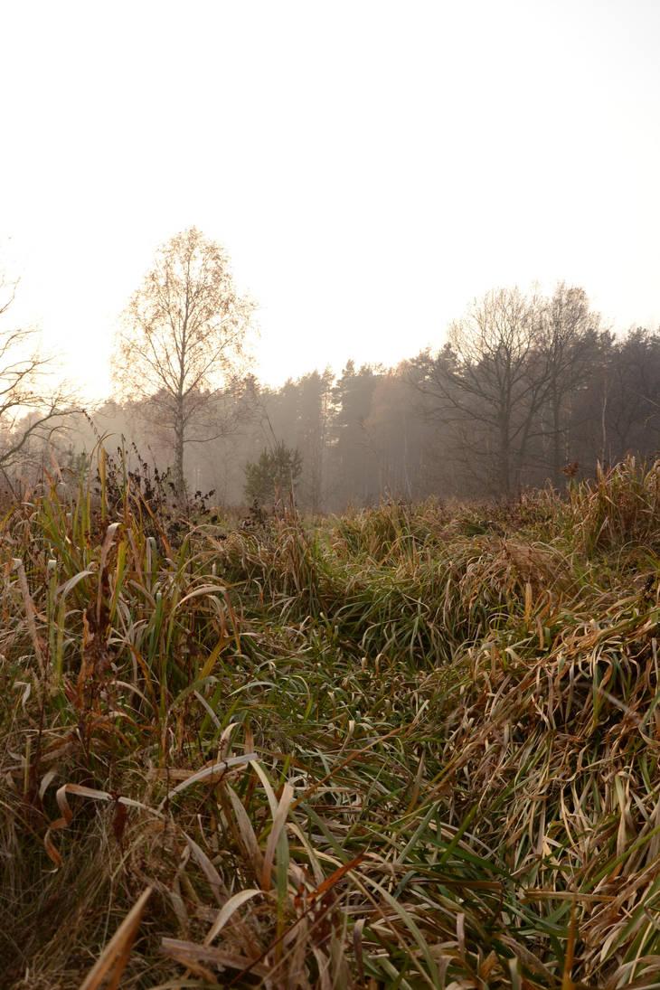 Grass Maze by feainne-stock