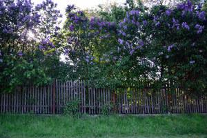 A fence by feainne-stock