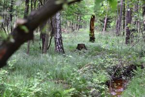 Tree trunk by feainne-stock