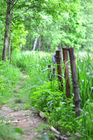 Forest Path by feainne-stock