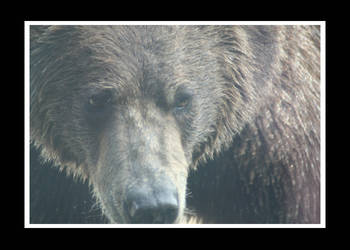 Bear by essence698