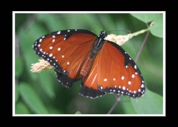 Butterfly4 by essence698