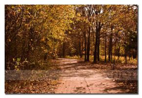 Fall trails by filya1