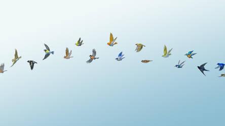 Waltz for little birds wallpaper by perodog