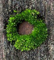 Moss ... by Chotacabras
