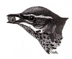Turdus iliacus by Chotacabras
