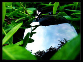 reflections and plants by nostrom