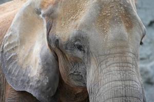 Elephant by Magellan89