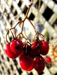 Bad Berries by KealeS