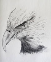 Eagle by Quillustrate