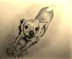 Chihuahua (Mia) by MrEyeCandy66