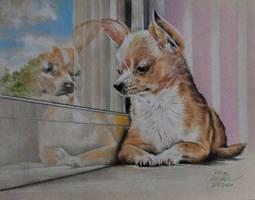 Chihuahua (reflection study colored pencil) by MrEyeCandy66