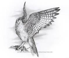 Falcon by LeviaDraconia