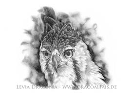 Ornate Hawk Eagle by LeviaDraconia