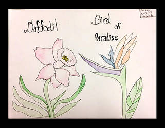 Daffodil Bird of Paradise by DH-Students-Gallery