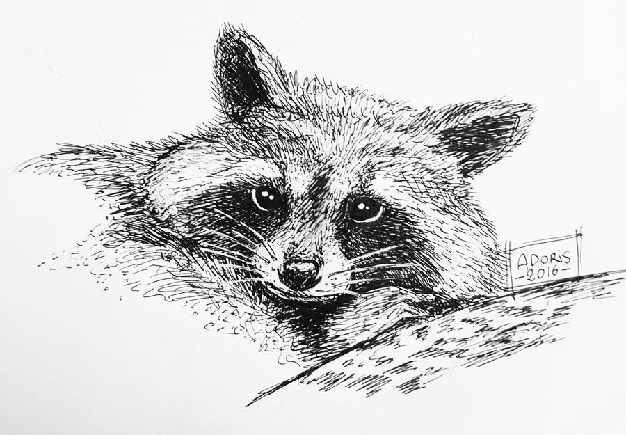Little raccoon by AdorisArts