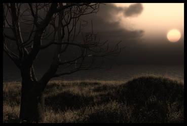 tree sunset stock by anodyne-stock